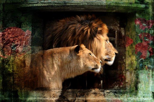 Löwen von Ralf D.-K